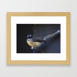 Fantail Framed Art Print