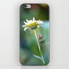 colourful depth of field iPhone & iPod Skin