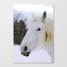 Lovely White Horse Canvas Print