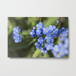 Forget Me Not Photography Print Metal Print