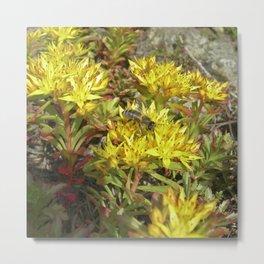 yellow cactus bloom V Metal Print