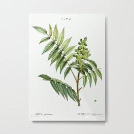 Staghorn sumac (Rhus typhina) from Traité des Arbres et Arbustes que l'on cultive en France en plein Metal Print