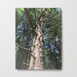 Looking upwards at tree Metal Print
