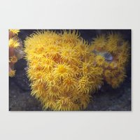 coral Canvas Prints featuring Coral by Deborah Janke