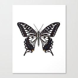 Asian Swallowtail Canvas Print