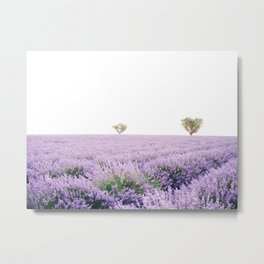 Beautiful Lavender Fields of Provence, France Metal Print
