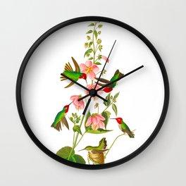 Columbian Hummingbird Wall Clock