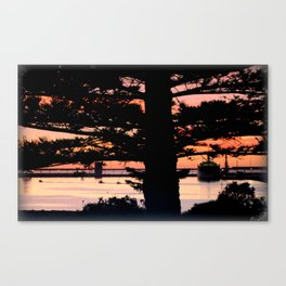 Early morning behind a Norfolk Pine Canvas Print