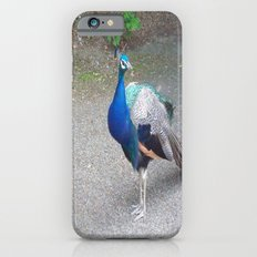 Peacock Suit Slim Case iPhone 6s