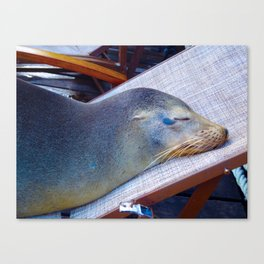 Maximum Relaxation Canvas Print