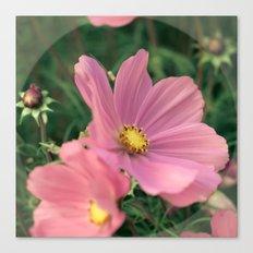 Wild flower in pink Canvas Print