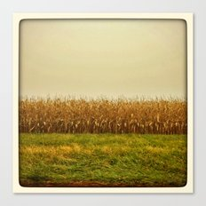 Corn Lines Canvas Print