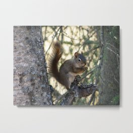 Soldotna Red Squirrel Metal Print