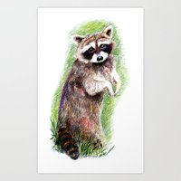 raccoon Art Prints featuring Raccoon by Anna Shell