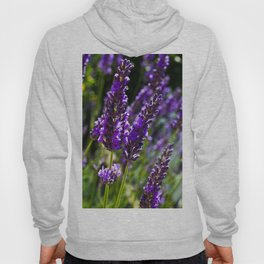 Lavender in The Sun Hoody