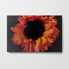 Sunflower DPG161127a Metal Print