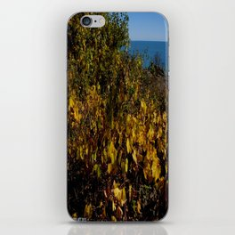 Fall Gold on the Lake Shore (Chicago Northerly Island Collection) iPhone Skin