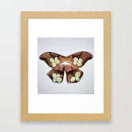 Moth with Yellow Flowers Framed Art Print