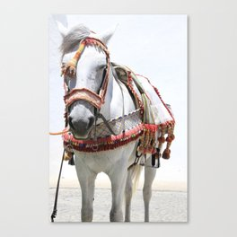 Decorated Horse of Andalusia Canvas Print