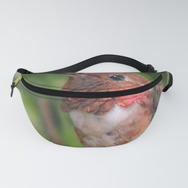 Hummingbird in the Japanese Maple Fanny Pack