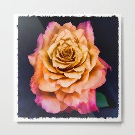 Wild Free Spirit Rose Metal Print