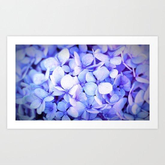 Periwinkle Hydrangea Flowers by lilkiddies