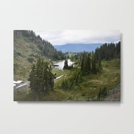 Forest and the Trees Metal Print