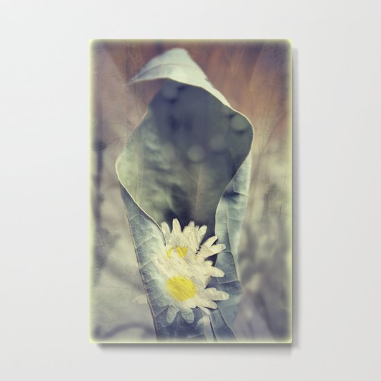 I know my Daisies Metal Print