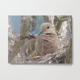 Tucson Dove Metal Print