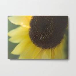 Summer Day Sunflower | photography Metal Print