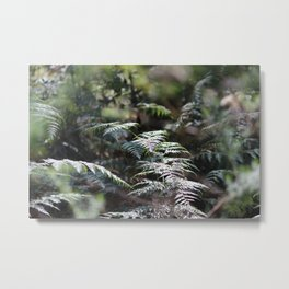 Fern 2 Metal Print