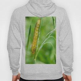 Magic Grass - Caterpillar - Macro Hoody