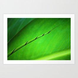 Canna Leaf Spiral Twist Art Print