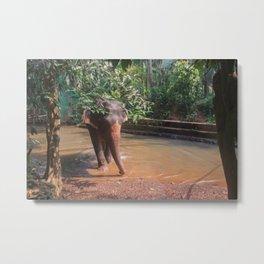 Indian elephant Metal Print