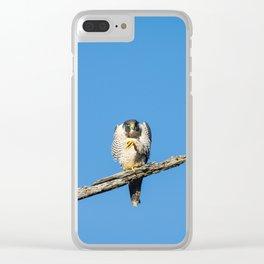 A Grumpy Peregine Falcon Clear iPhone Case