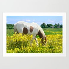 Horse in field of flowers Art Print