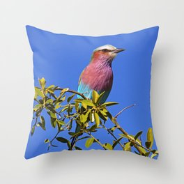 Lilac-breasted roller - Africa wildlife Throw Pillow