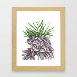 Fritillaria Lavendar Framed Art Print