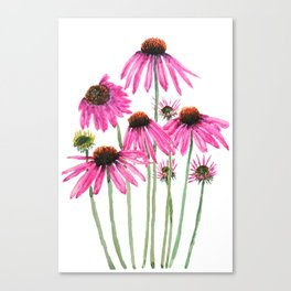 pink coneflowers watercolor Canvas Print