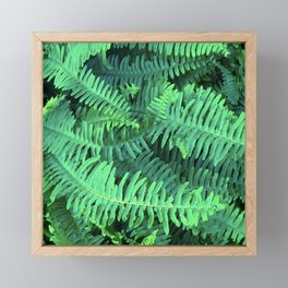 Fairytale Fern Leaves In Exquisite Green Hues Framed Mini Art Print
