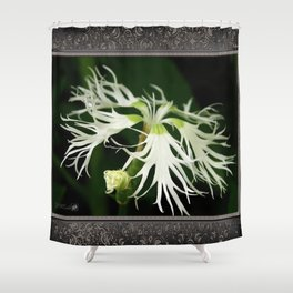 Dianthus named Superbus White Shower Curtain