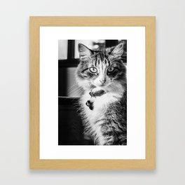 Cat Sofia 2 Framed Art Print