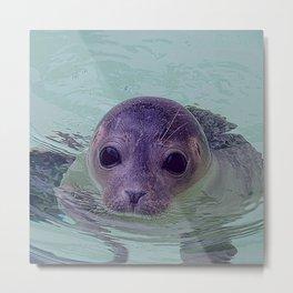 Cute Baby Seal 1217 Metal Print