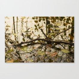 swamp I Canvas Print