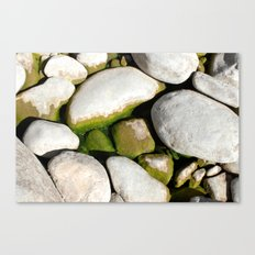 Mossy Mossy Canvas Print