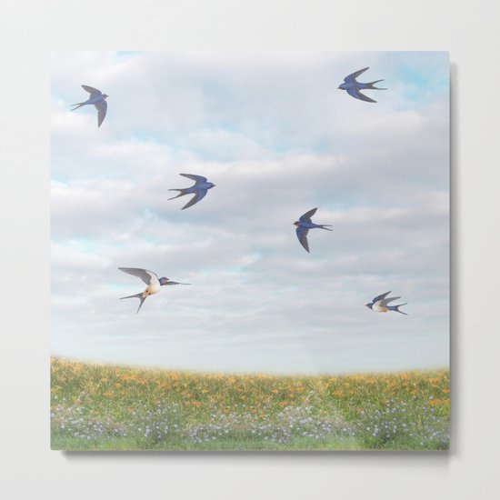 barn swallows, day lilies, and chicory Metal Print