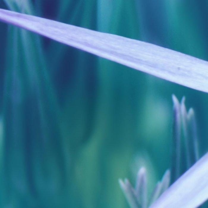 Allium Blue Leggings