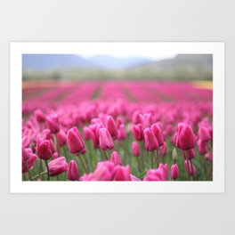 Chilliwack Tulips Art Print
