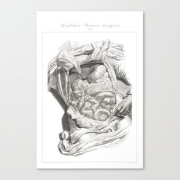 Human Anatomy Art Print LIVER STOMACH COLON Vintage Anatomy, doctor medical art, Antique Book Plate Canvas Print