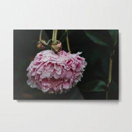 Pink Peony After Rain II Metal Print